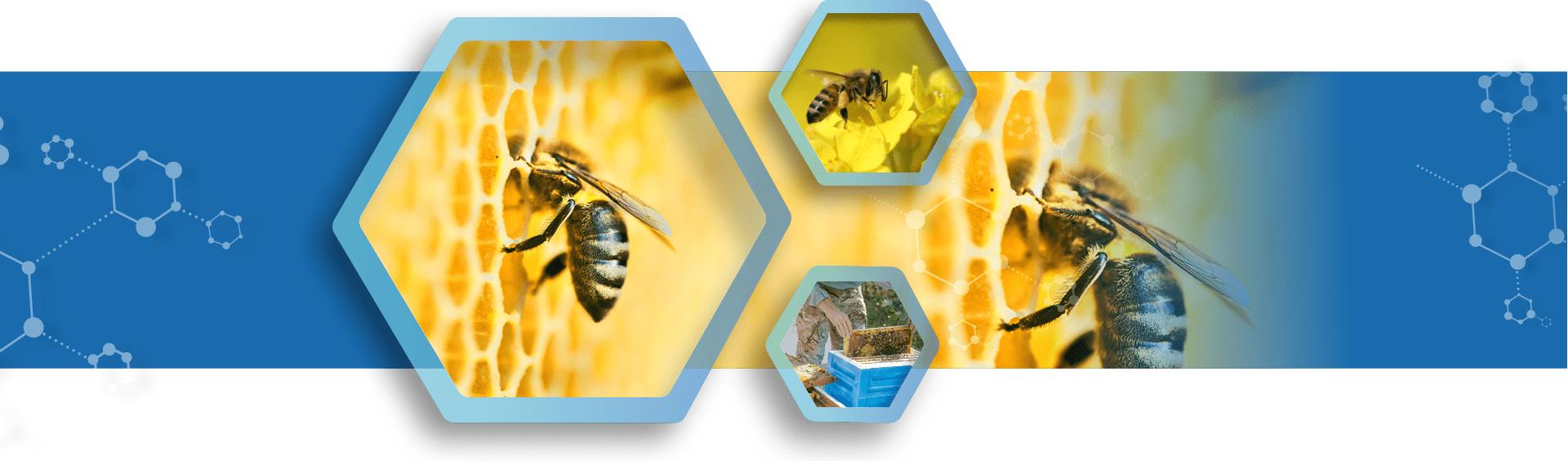 lunazyna pszczoly epigenetyka